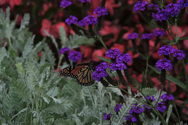 Botanical Gardens - flowers and butterfly